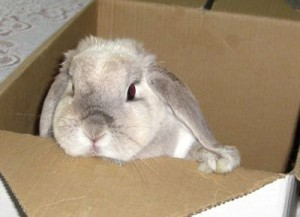 Rabbit in box at home