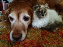 pet sitting petsitting dog cat bird fish overnight columbus ohio ill special needs handicapped